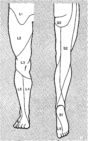 01_dermatomes_lower_limb