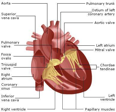 Valvular Heart Disease - Image 1