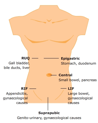 Fig 1. Simplified abdominal examination regions