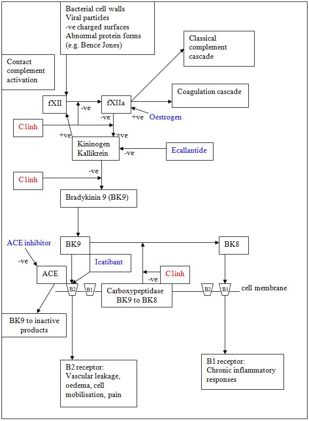 angioedema_bradykinin_pathway