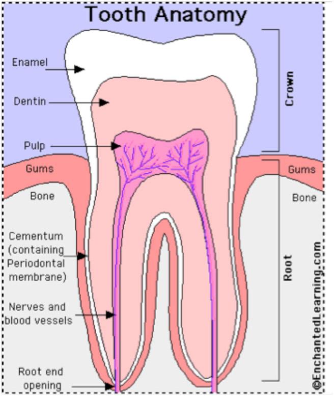 More Dental Emergencies Rcemlearning