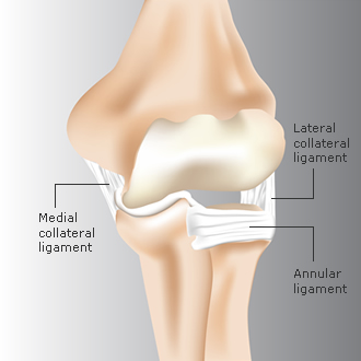 elbow_anatomy3