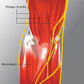 elbow_anatomy5