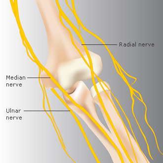 elbow_anatomy6